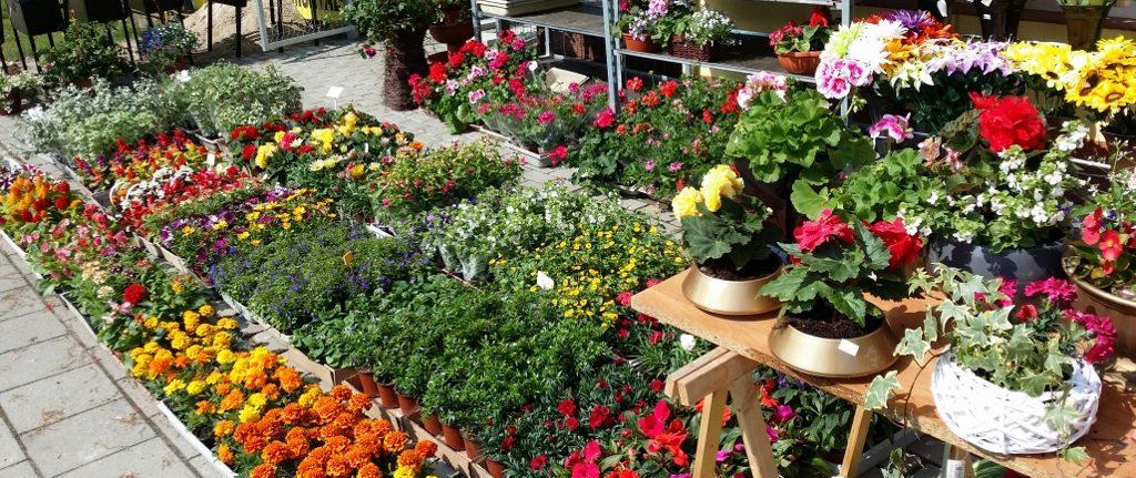 Kwiaty Rabatowe Balkonowe