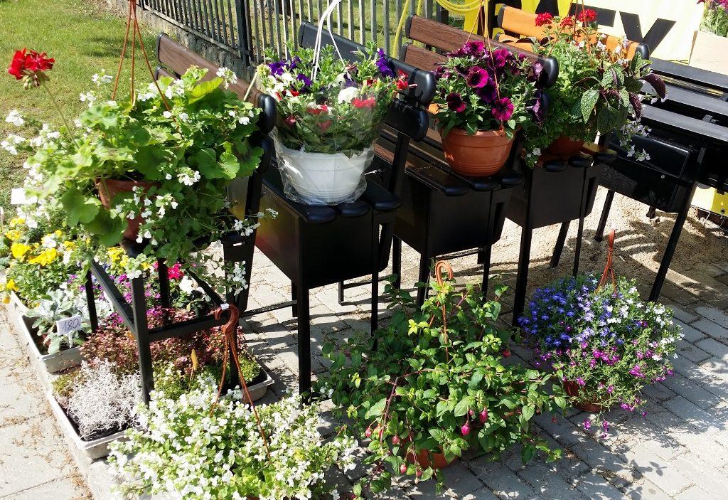 Kwiaty Rabatowe, Balkonowe