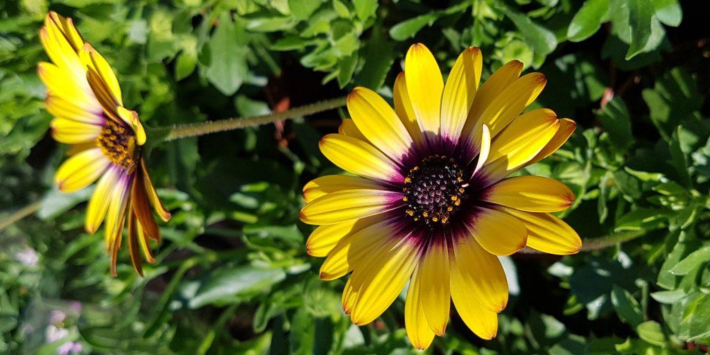 Kwiaty Rabatowe Krosno Odrz
